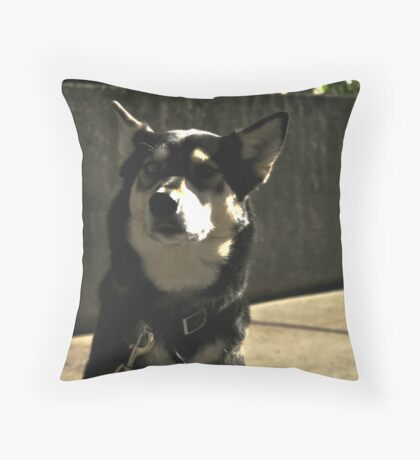Cute Black Dog Throw Pillow