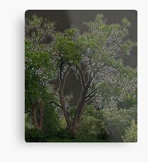 Keyhole Trees Metal Print