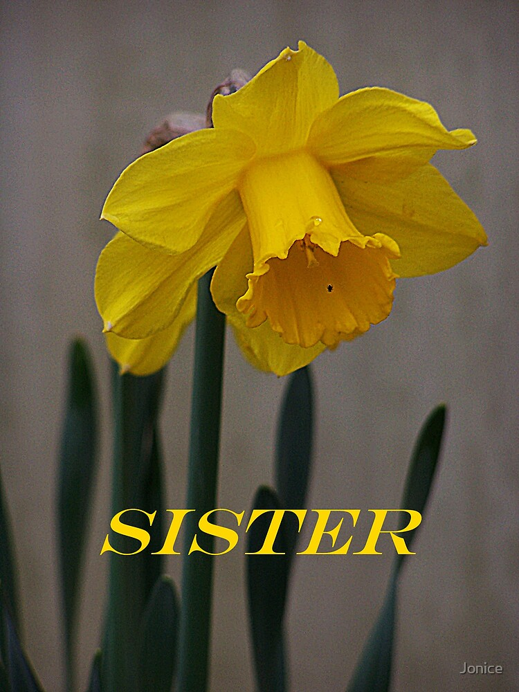 Daffodil Sister Card by Jonice