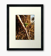 Green Thorn Framed Print