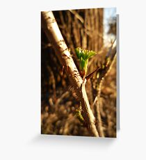 Green Thorn Greeting Card