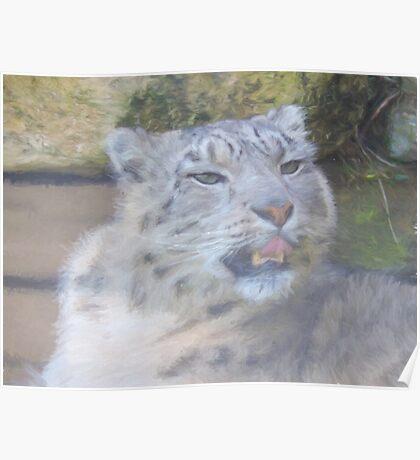 Snow Leopard Portrait (Photo Cezanne Style) Poster