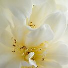 White Camelia by Ann Garrett