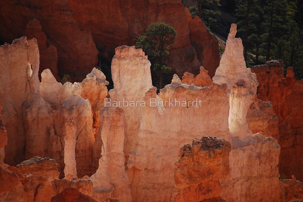 Hoodoo's Of Bryce Canyon by Barbara Burkhardt