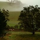 Misty,Dewy,Damp,Macendon Ranges by Joe Mortelliti