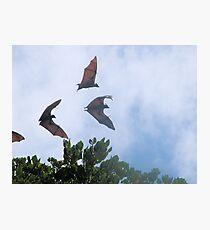 'Batty' Photographic Print