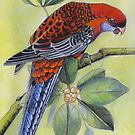 Crimson Rosella   Art piece by sandysartstudio