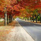 Autumn colour taken at Mt Macedon in Victoria,Australia                     by David Smith
