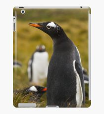 Gentoo Penguin iPad Case/Skin