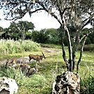 Safari Antelope by terrebo