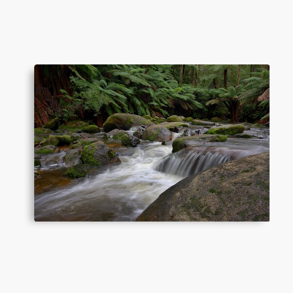 Dance of the Silken White - Toorongo River Canvas Print
