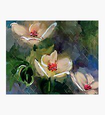 Night Blooming Dogwood Photographic Print