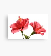 Hibiscus flowers Canvas Print