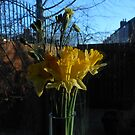 Daffodils on Windowsill by Kathryn Jones