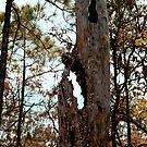 Grumpy Old Tree by Cheri Bouvier-Johnson