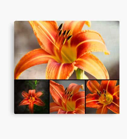 Tiger Lily Collage Canvas Print