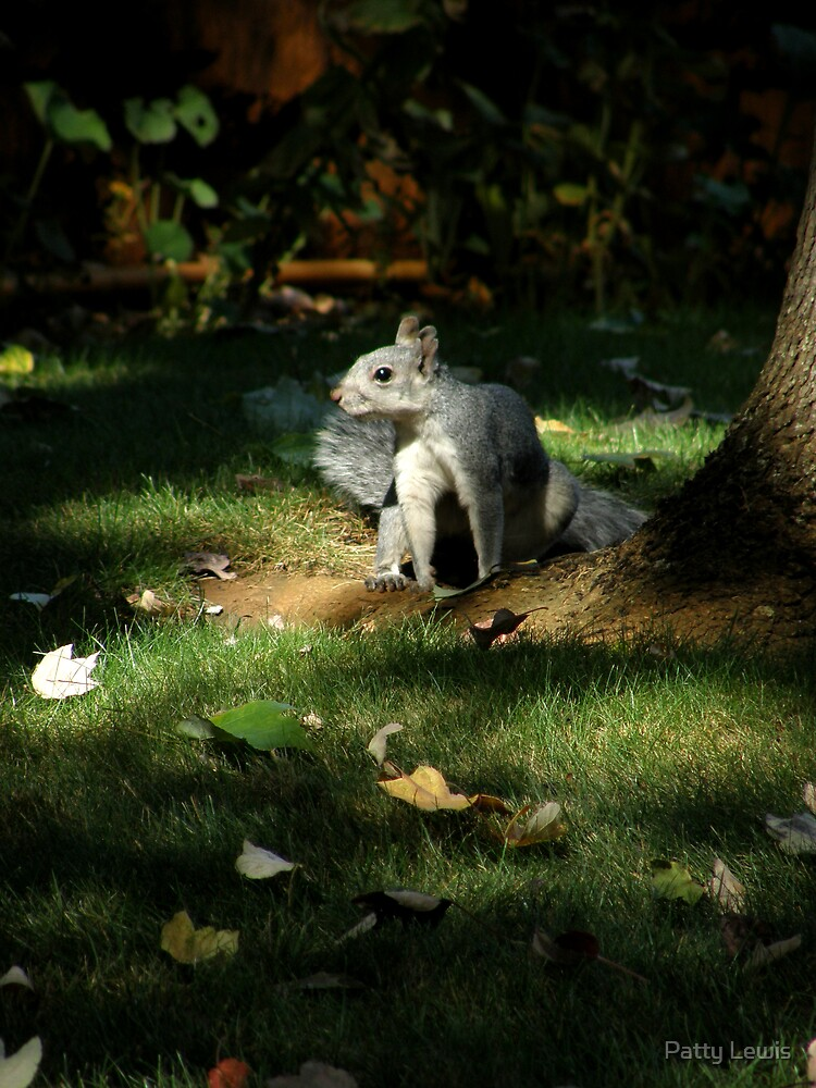 """""""Nature's Spotlight""""  Evening Light and a Playful Squirrel by Patty Boyte"""