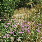 Wild Flowers near St Elmo Colorado by janetmarston