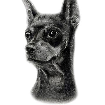 Miniature Pinscher by Danguole