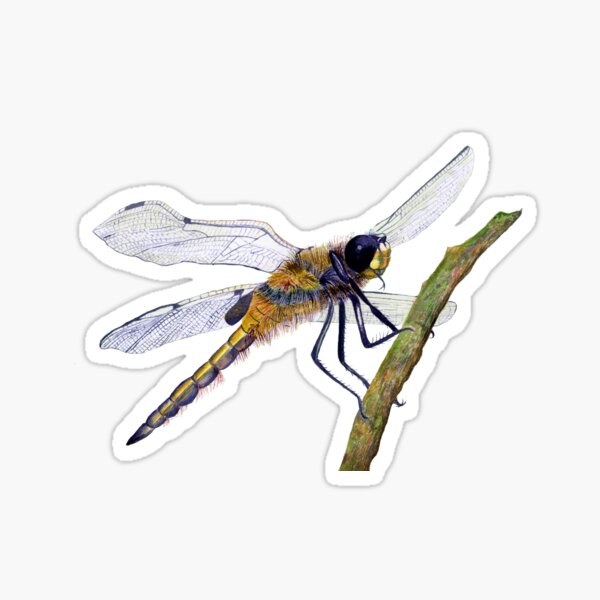 Hairy Dragonfly Insect Watercolor Painting Artwork Sticker