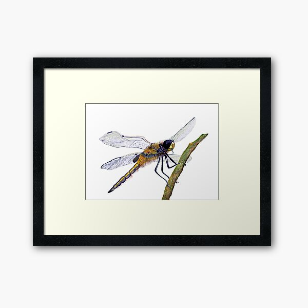 Hairy Dragonfly Insect Watercolor Painting Artwork Framed Art Print
