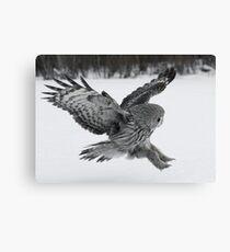 Great Grey owl hunting Canvas Print