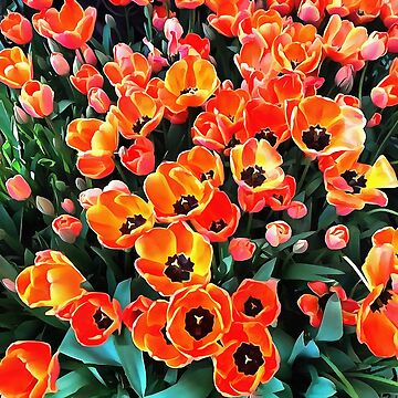 Bright Red Tulips of Istanbul by taiche