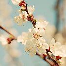 Cherry Blossom by VikaRayu
