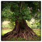 Roots 1/3 by Marc Loret