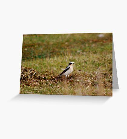 Bird I/D Please?  Great Gray Shrike? Greeting Card