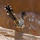 Roadrunner by © Loree McComb