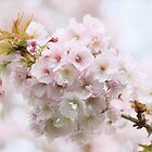 Spring Himley Blossom by Alyson Fennell