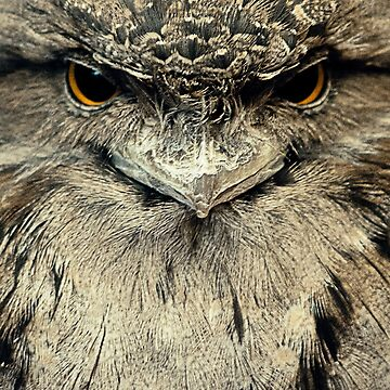 Tawny Frogmouth by GreenEyedHarpy