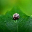 Caracol by Pandrot