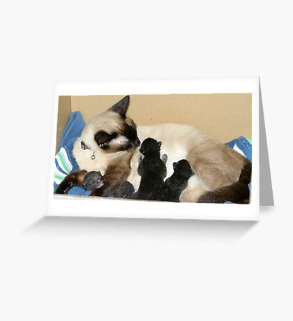 Newborn Kittens with mommy Greeting Card