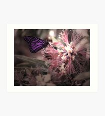 Beautiful Butterfly Art Print