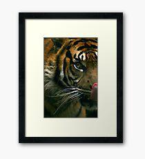 The Sumatran Tiger Framed Print