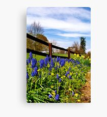Bluebells & Daffodils  Canvas Print