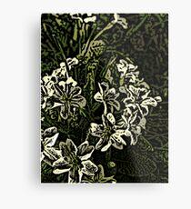 Primrose  Metal Print