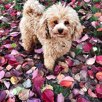 Raffie loves the autumn leaves! by rozmcq