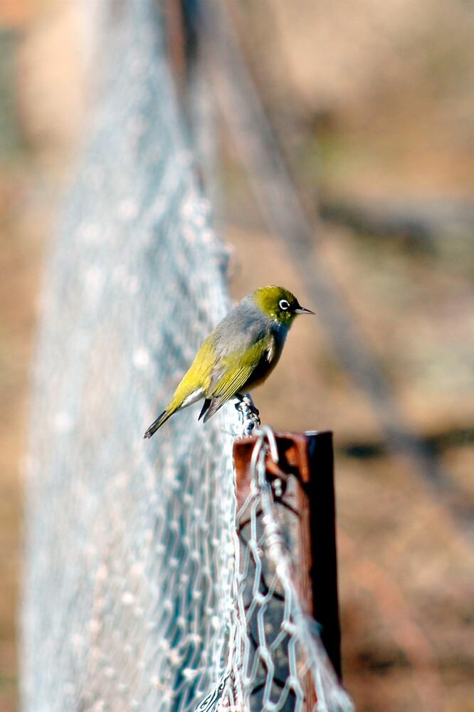 Bird on a Wire by Frank Donnoli