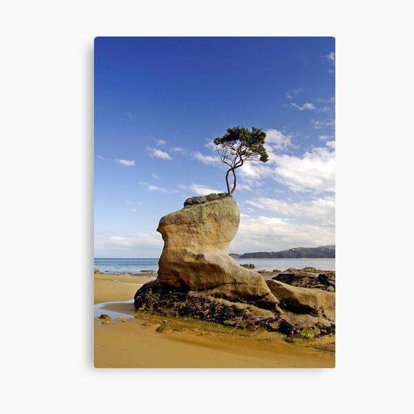 Beached Tree Canvas Print