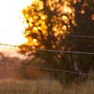 Sunset across the paddock by peterhau
