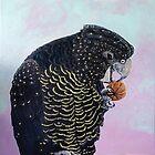Black Cockatoo by catafinity