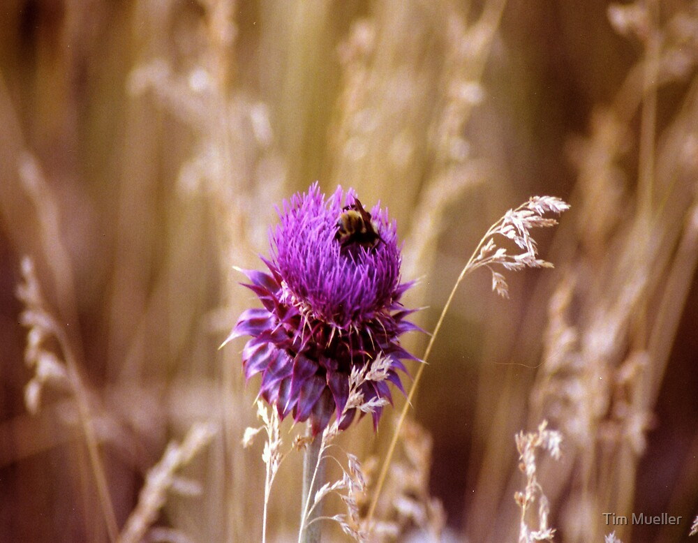 Thistle by Tim Mueller