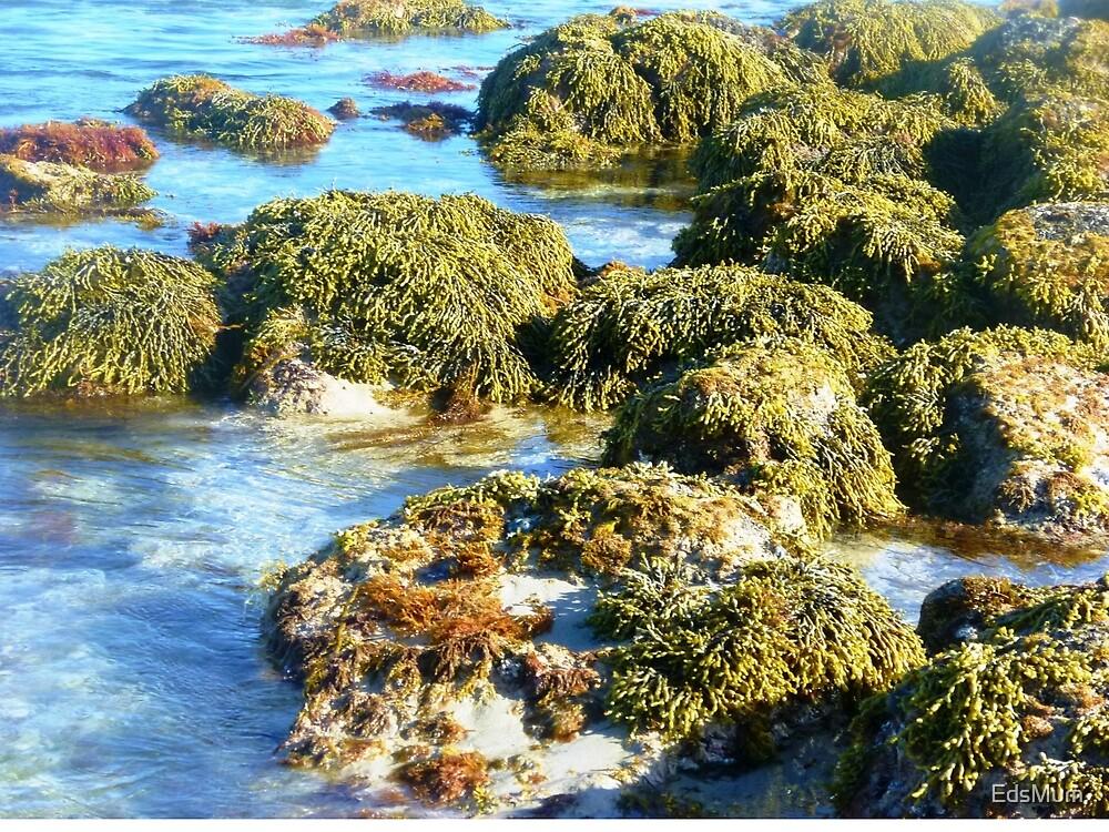 Killarney Beach, Vic. Australia by EdsMum