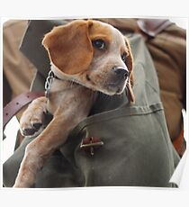 dog look cases! good product for dog lovers. Poster