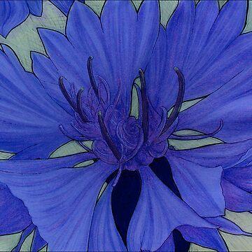 Cornflower by arstone