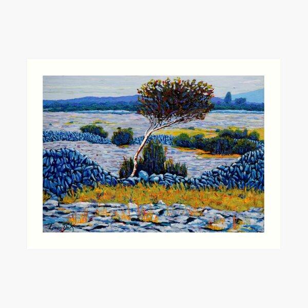 Burren Tree, County Clare Ireland Art Print