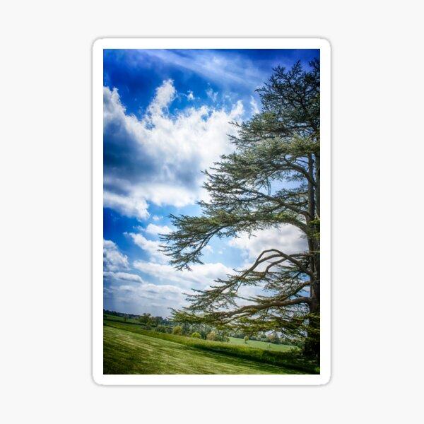 Cedar of Lebanon tree with blue sky Sticker
